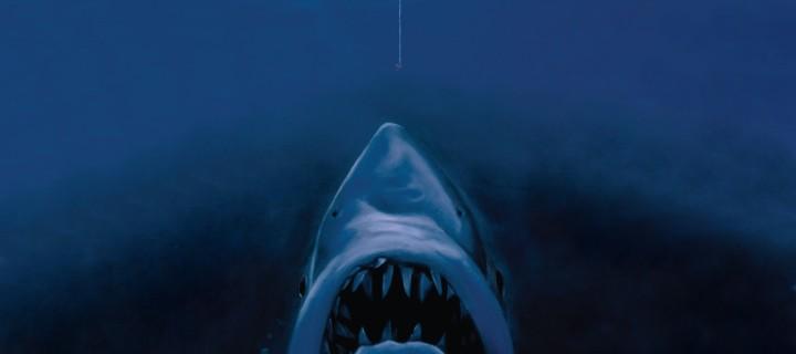 Акула в покере: как стать покер акулой